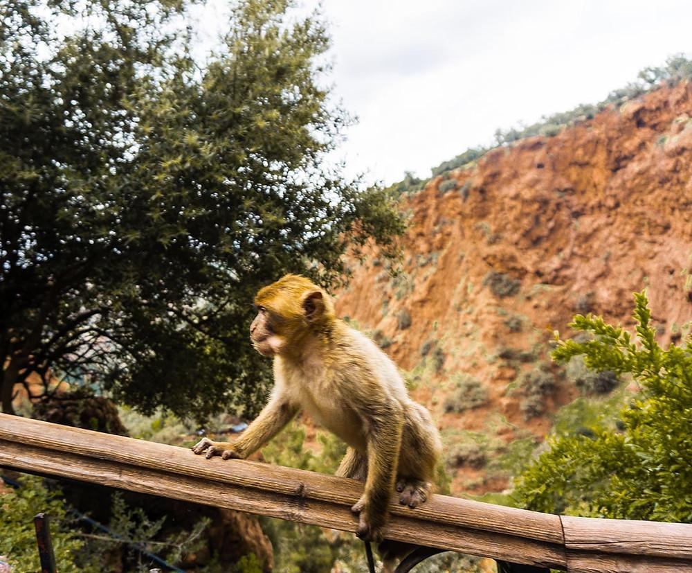monkey sitting on handrail