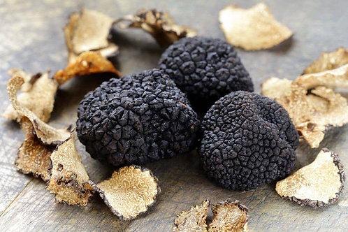 Tartufo nero (tuber uncinatum)