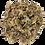 Thumbnail: Palourdes au naturel - 800 gr.