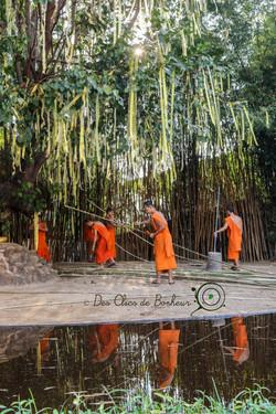 Doi inthanon (Thaïlande)