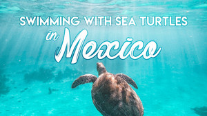 Swimming With Sea Turtles in Mexico