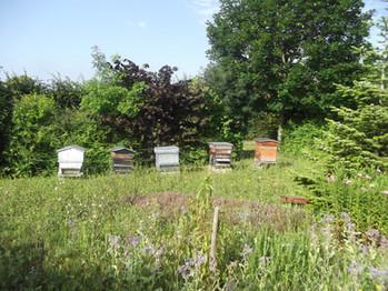 Les ruches