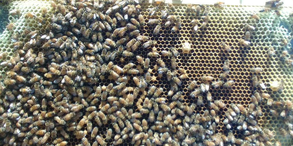 February Meeting: Honey Production with Single Brood Chamber Hives