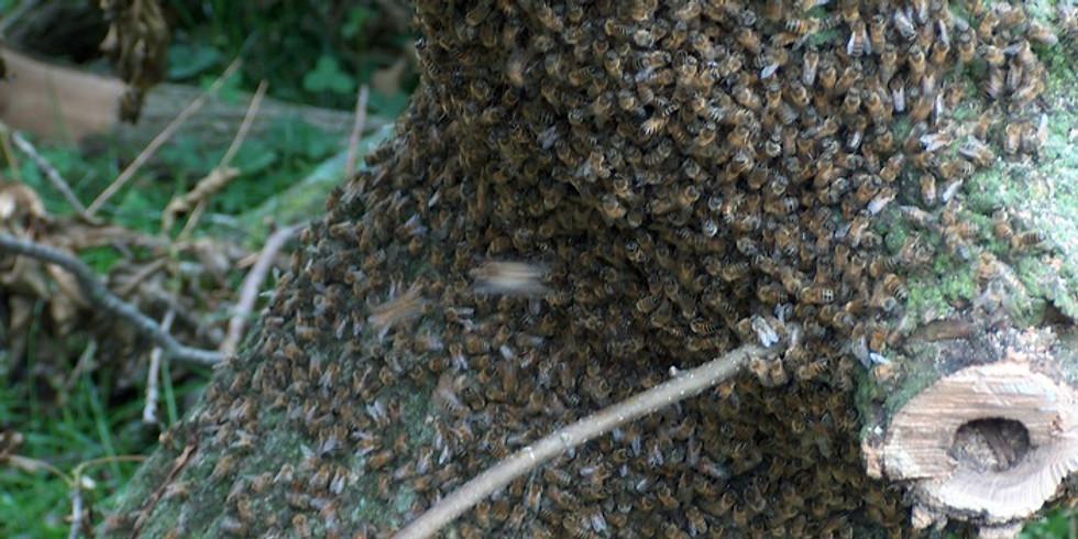 National Honey Bee Day
