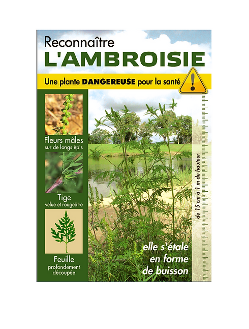 2021_08_07_ambroisie_image.PNG