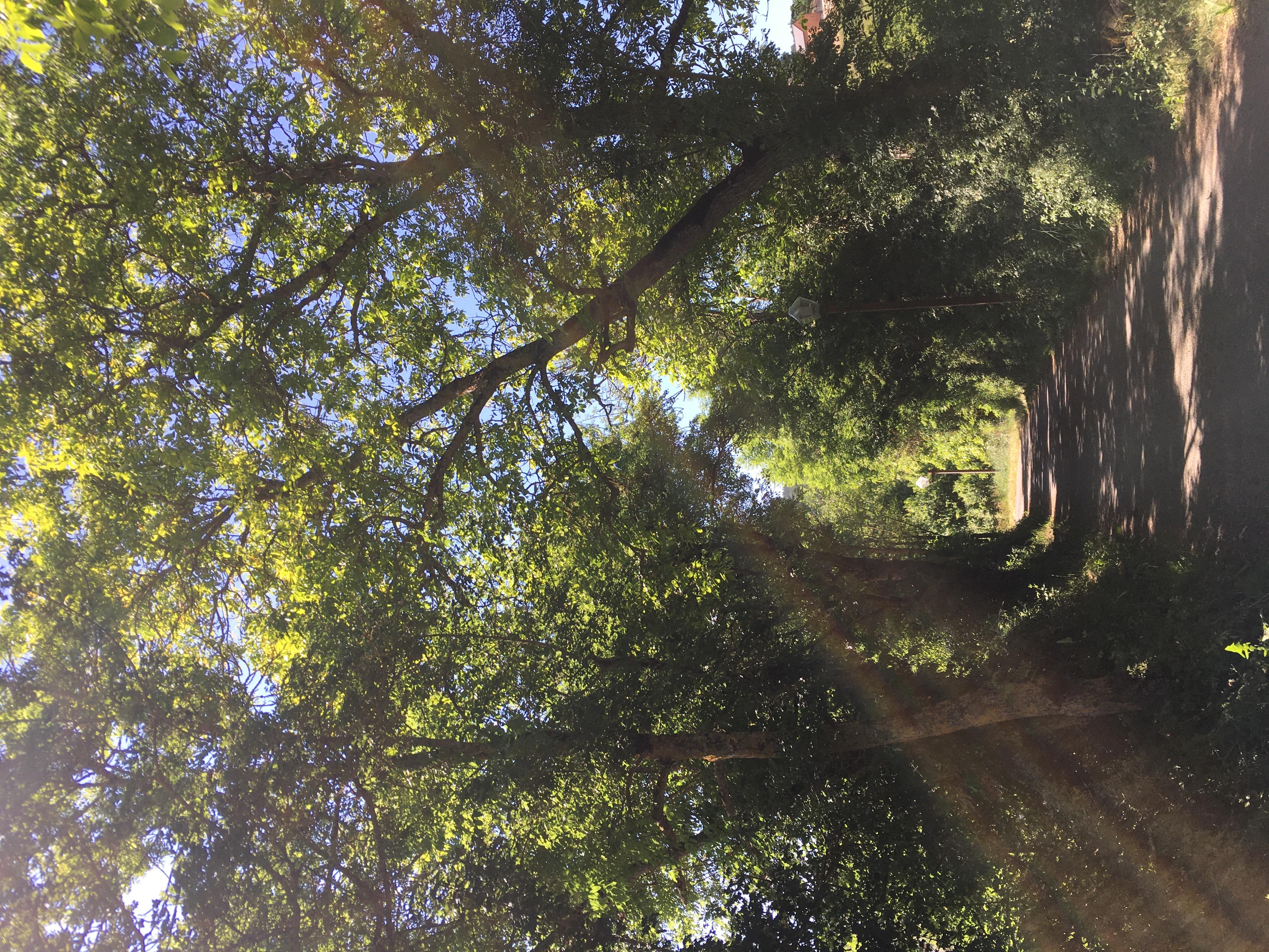 chemin des jardins - le Bruel.JPG