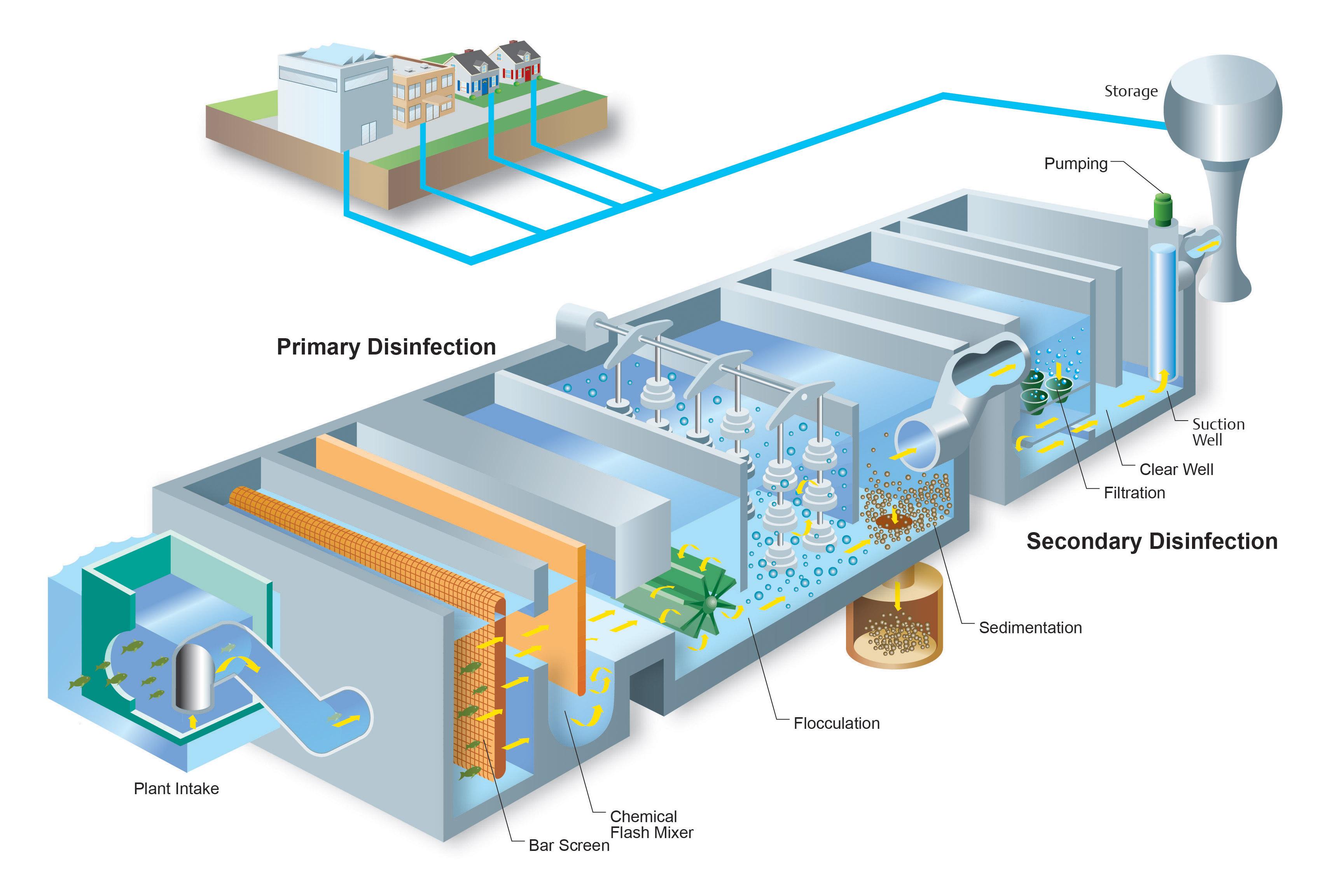 Water Plant2 RGB.jpg