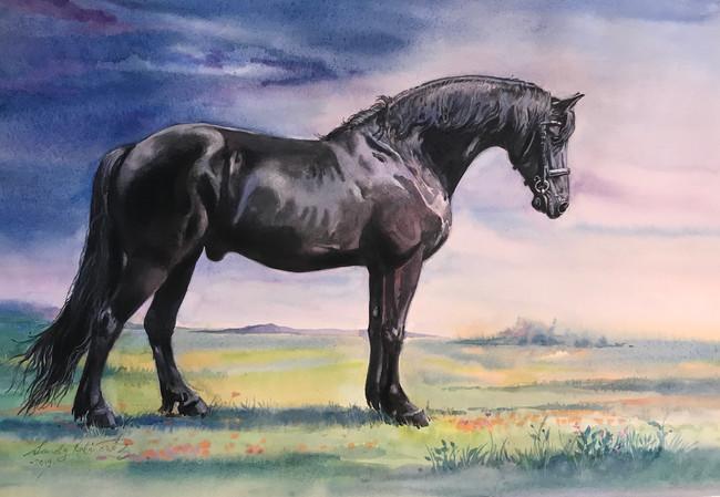 Mikey, a Freisan horse