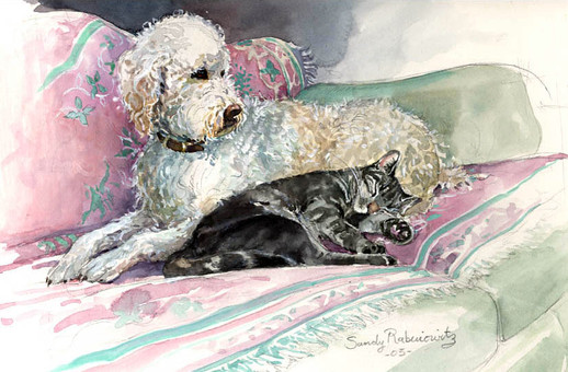Poodle and Cat