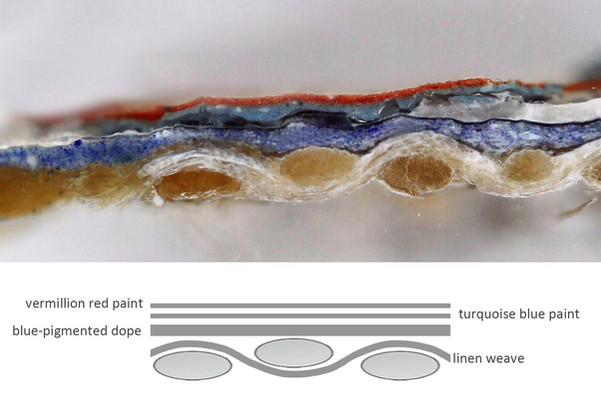 Microscopic view cross-section