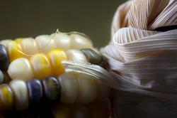 corn+9681.jpg