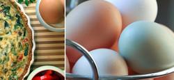 WIX eggs.jpg