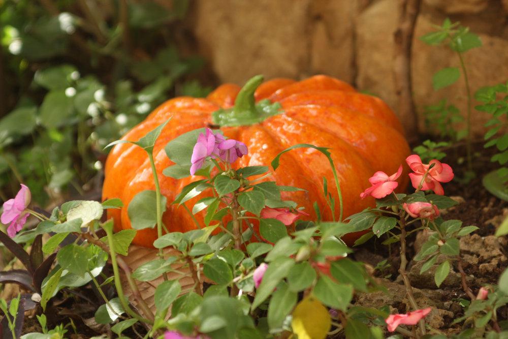 Teen's/AcnePumpkin Clarifying