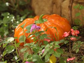 It's Pumpkin Time!!!