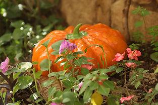 Ceramic Garden zucca