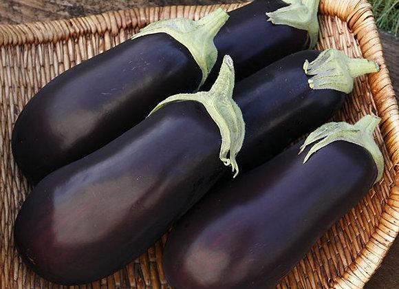 Eggplant Traviotta Plant Sale