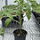 Thumbnail: Mystery Garden Plant Sale