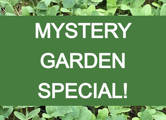Mystery Garden Plant Sale