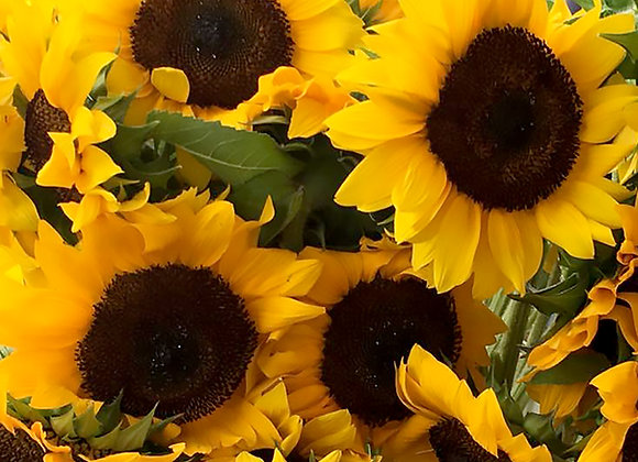 LARGE SUNFLOWER BOUQET (12 stems)