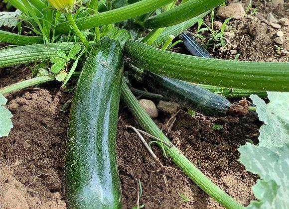 Zucchini - Per Piece