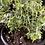 Thumbnail: Herb Garden Kit