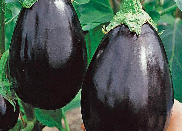 Classic Black Eggplant Plant Sale
