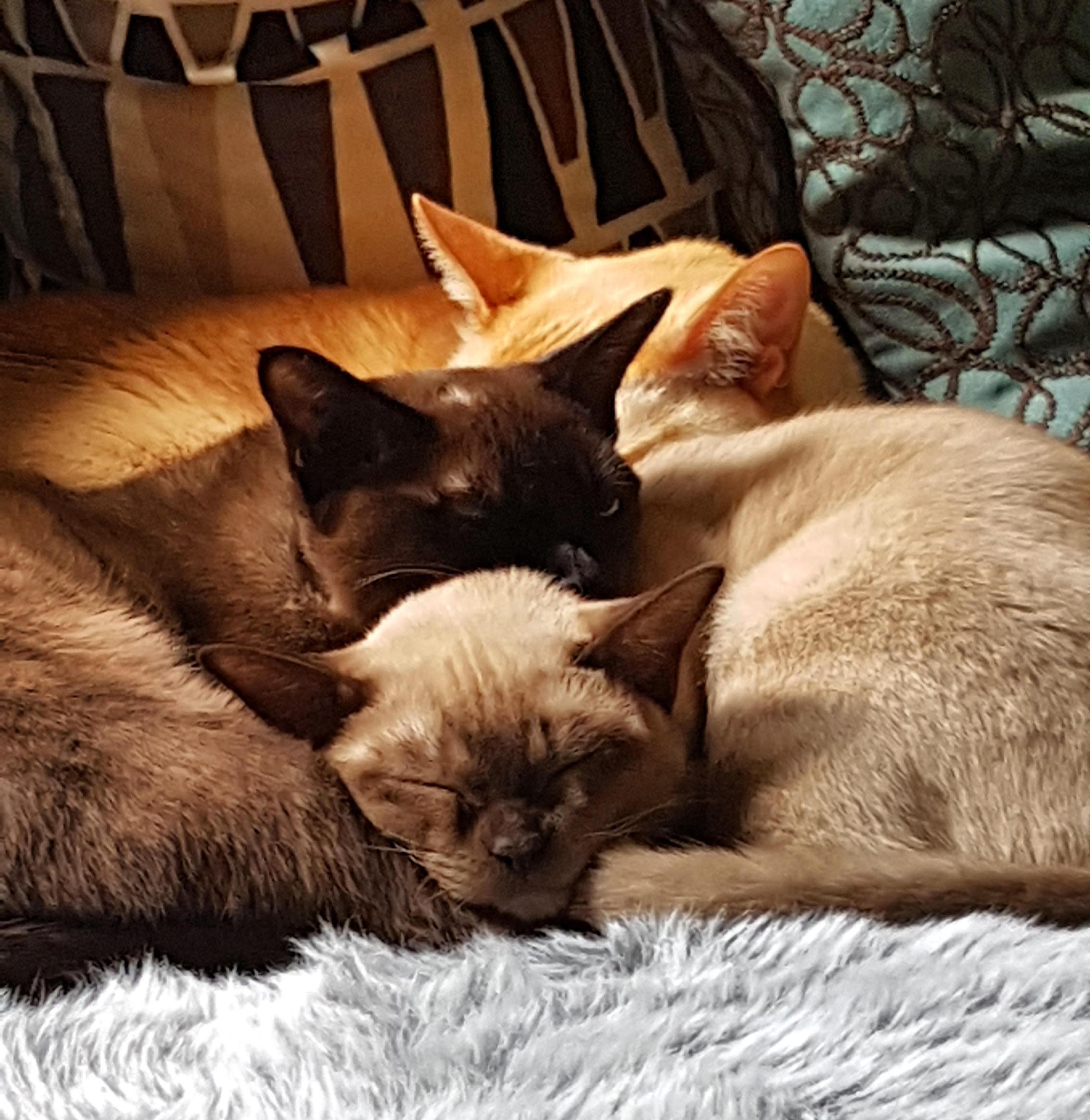 Samson, Mia & Jess