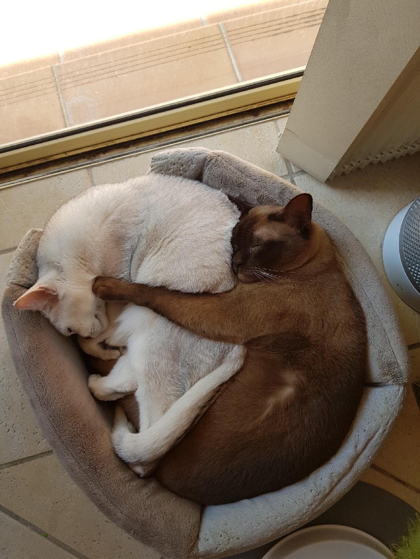 Akina & Shelby