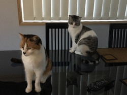 Juliet & Arya