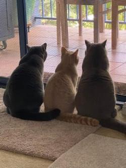 Penny, Winston & Otis