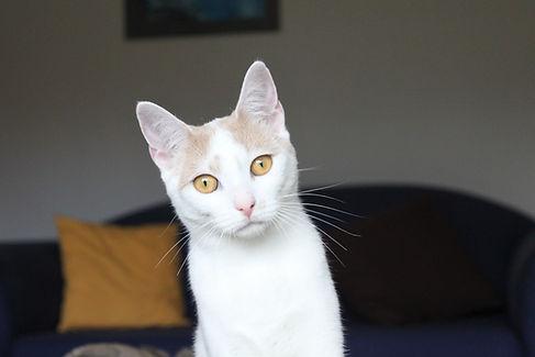 Help with cat behaviour