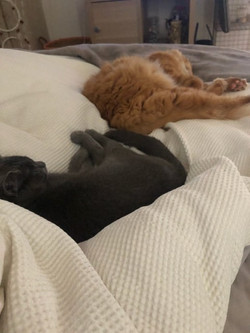 Ginger and Luna