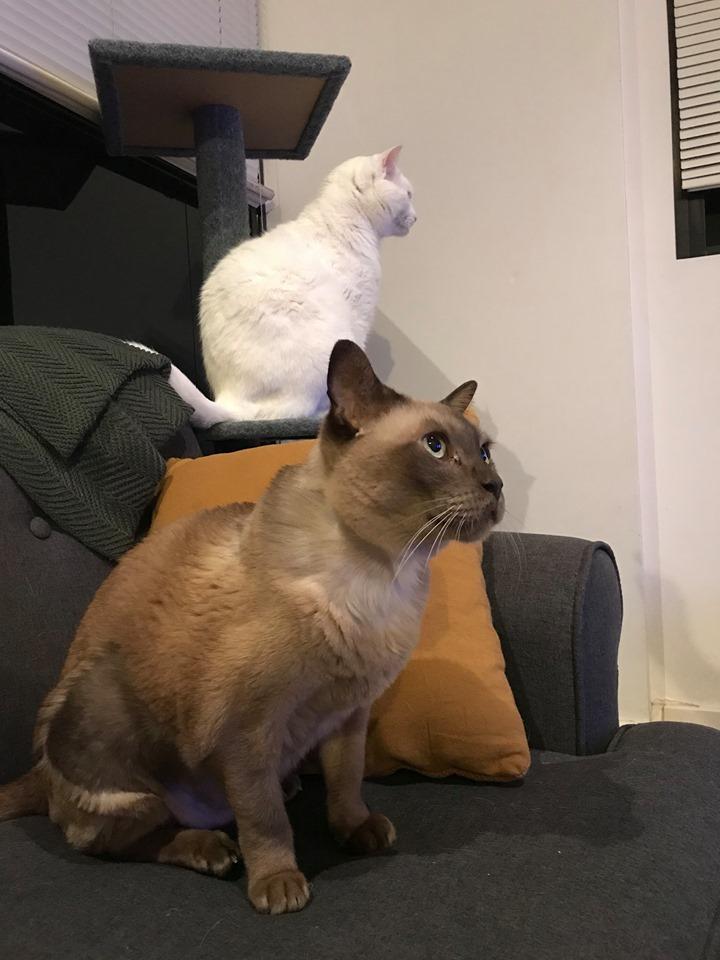 Henry & Kobi