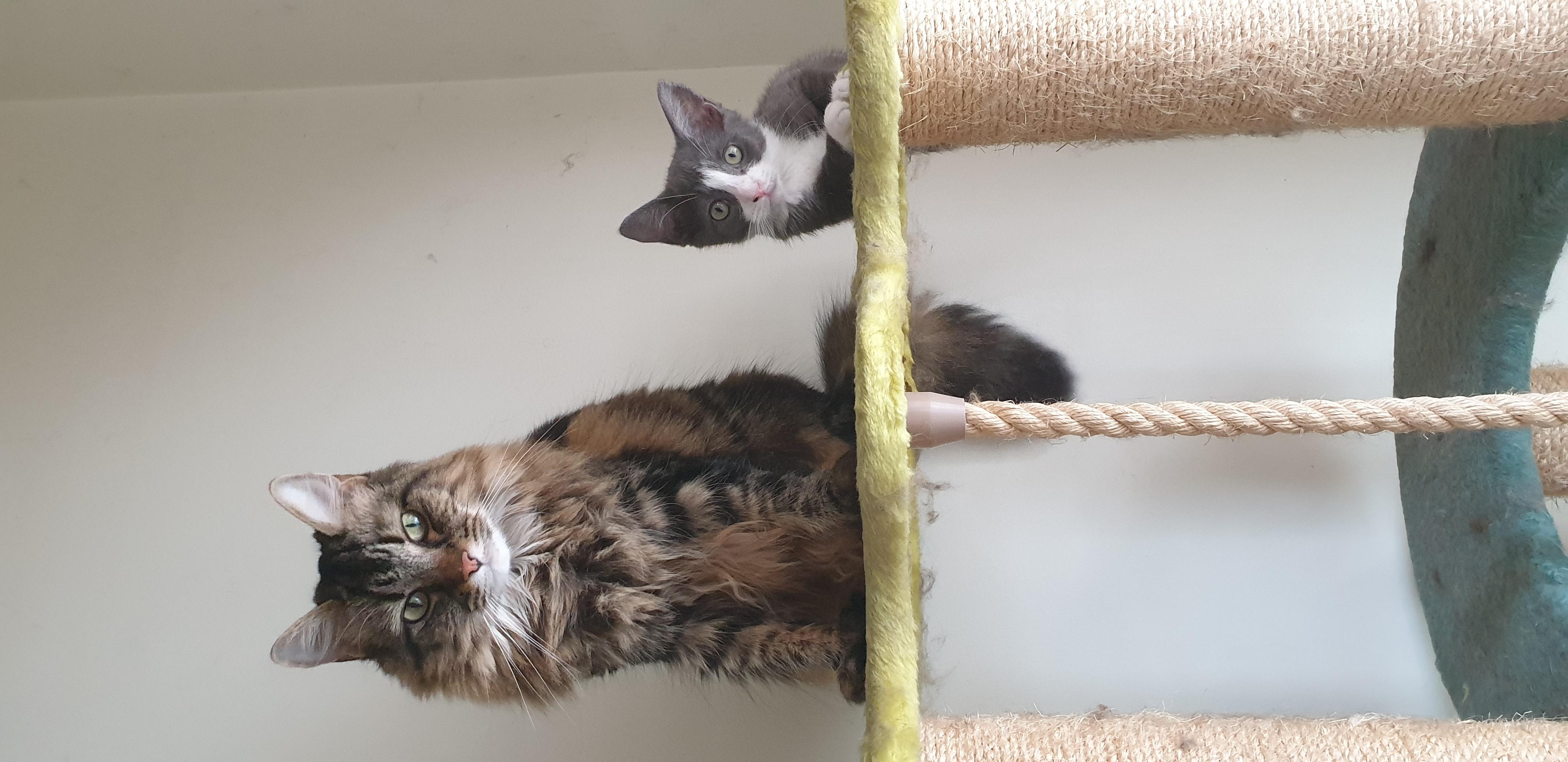 Lily & Pearl (kitten)