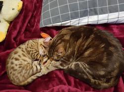 Teddy & Meeka