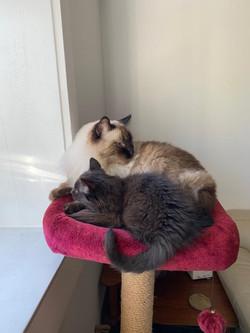 Pussington & Katya