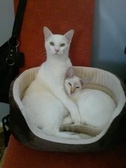 Mo and Tilli