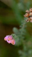 Lichtgevend bloemetje