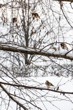 Putters in de sneeuw
