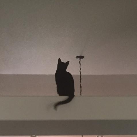 Fanta atop