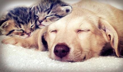 puppy and kittens sleeping.jpg
