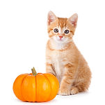 Cute orange kitten with a mini pumpkin i