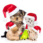 Large group of pets in red christmas hat