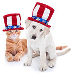 Patriotic happy American pet kitten cat