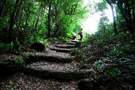 Saba Hike to Mount Scenery