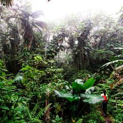 Mount Scenery, Saba