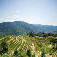 Dragon's Back Rice Paddy, China