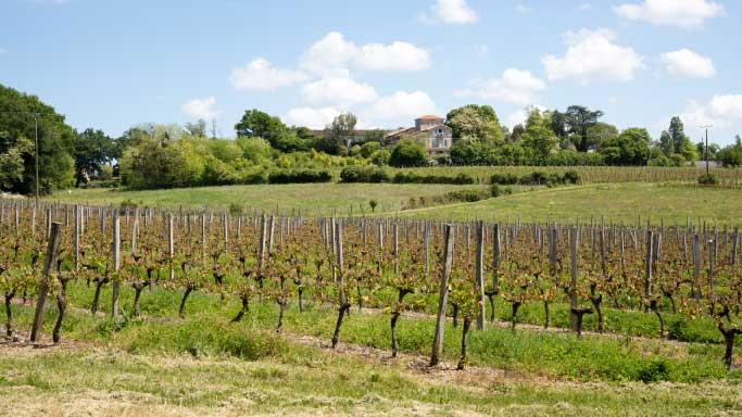 paysage-vigne