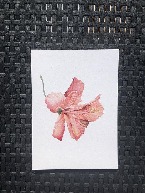 Hibiscus - tropical peach PRINT