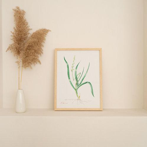 ORIGINAL ARTWORK - Ryegrass
